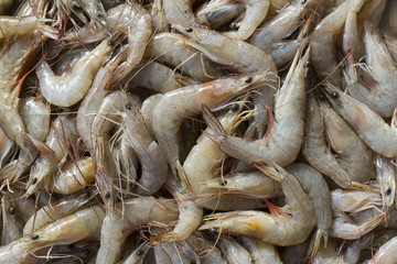 background of the large fresh shrimp seafood