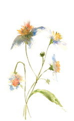 Beautiful wild flowers, watercolor illustrator