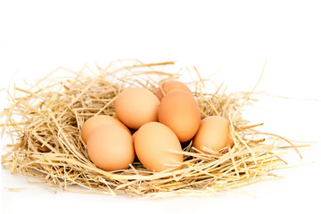 Fresh eggs on rice straw.