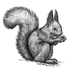 engrave squirrel illustration