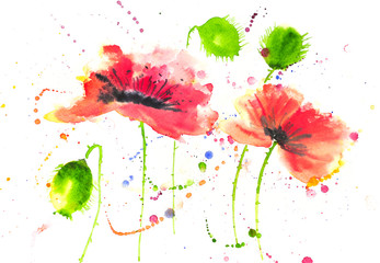 Red poppy flower in modern art watercolor painting
