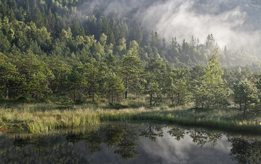 Misty forest and lakeside