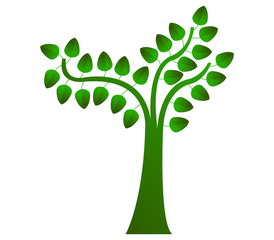 albero con foglie su sfondo bianco