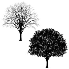 Very detailed tree in 2 versions