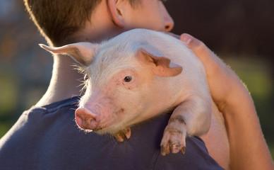 Piglet on man's shoulder