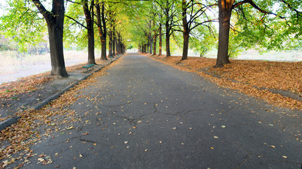 Autumn alley and empty bench in Botanical garden at sunset. Kiev