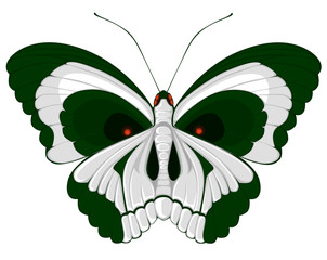 terrible butterfly with a skull on wings