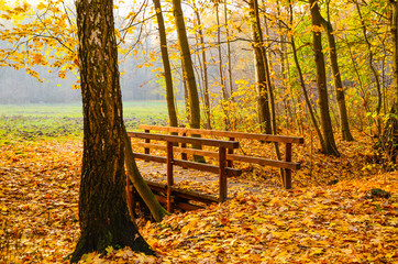 Mostek w Lesie
