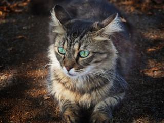 Beautiful furry cat pondered