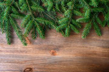 branch of green fir tree