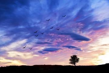 cielo azul sobre el campo