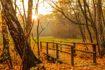 Autumn Scene in Forest