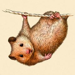 engrave hamster illustration