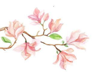 Watercolor with Magnolia flower