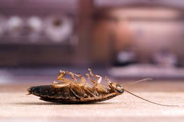 Таракан на кухонном столе на фоне кухни