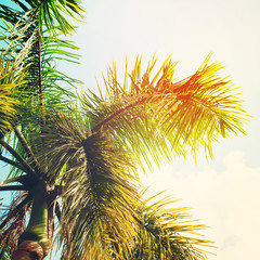 Leaves of Palm Trees in Sun Light. Background for Travel Card