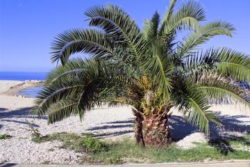 Big palm on the beach
