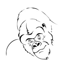 gorilla head stylized illustration