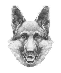 Portrait of German Shepherd. Hand drawn illustration.