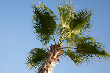 Пальма Palms
