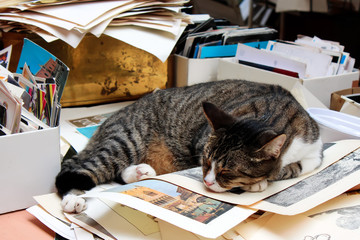 cat asleep,  table, paper