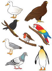 Bird Vector Illustrations
