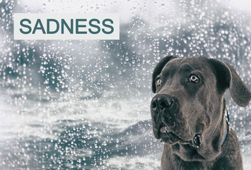 Sad dog on rain background