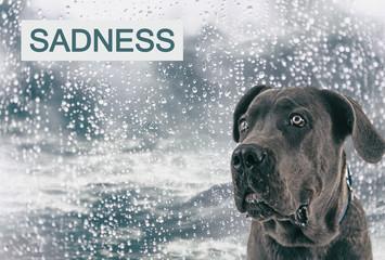 Sad dog on rain background