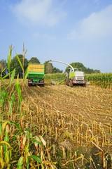 Wall Mural - Maishäcksler und Erntewagen bei der Maisernte