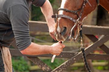 Horse having his sharp teeth filed