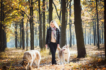 young beautiful female having fun with siberian husky in autumn park
