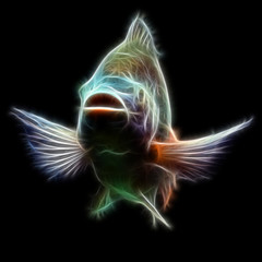 Tilapia Fish Fractal