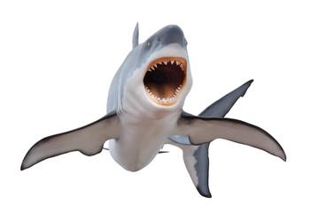 Fierce great white shark isloated on white