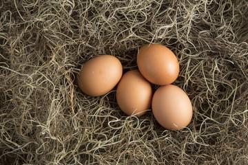 Huevos con nido.