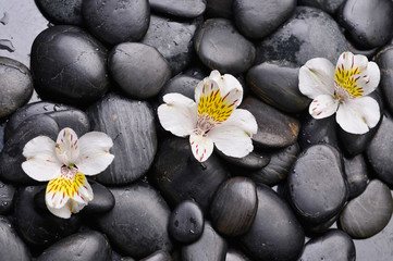 Set of three white orchid on black stones
