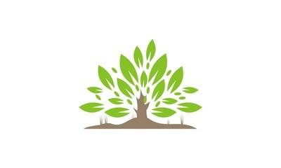 plants geer leaf