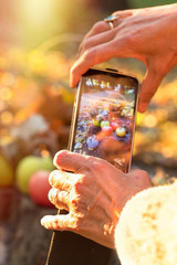 Taking picture autumnal fruit by mobile phone