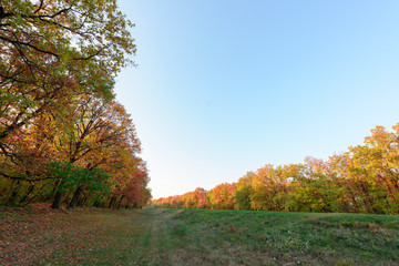 Autumn forest meadow with colorful trees and leaves