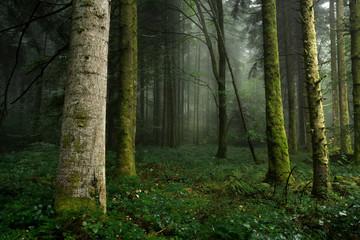 Sous bois avec tronc en premier plan