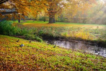Beautiful autumn scene in park in golden morning light at sunrise,