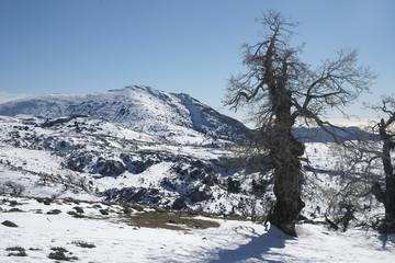 llegada de la estación del invierno a la sierra de las Nieves, Málaga