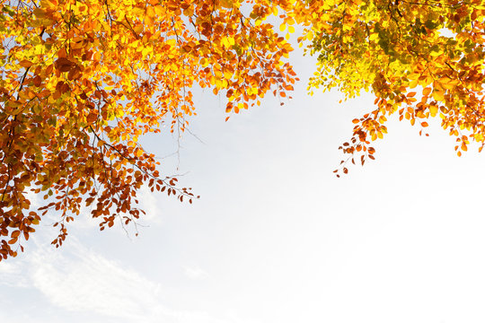 Beautiful fall tree branches, bright background