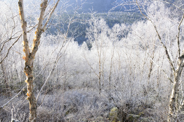 Frosty morning in the forest.
