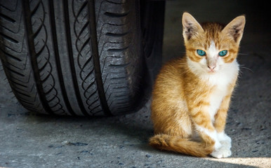 kitty under the car