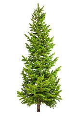 Christmas tree isolated on white background.