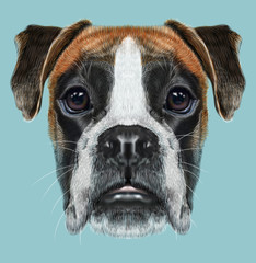Illustrated Portrait of Boxer dog on blue background