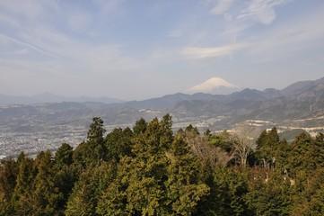 菜の花台より富士山