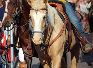 cowboy rides his horse