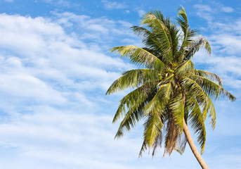 Uprisen angle of coconut tree in front of cloudy sky in Thailand.