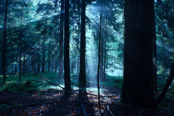 Mixed Forest in the Morning Light